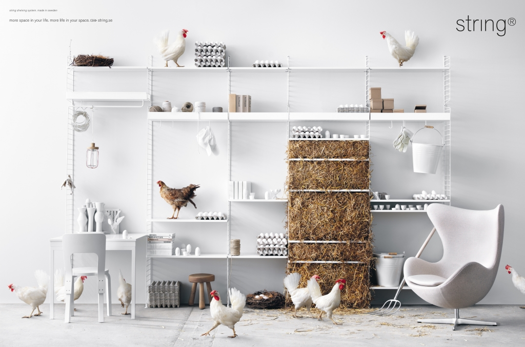 String AD Chickens Horizontal